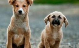Psy - Kliknięcie w obrazek spowoduje wyświetlenie jego powiększenia